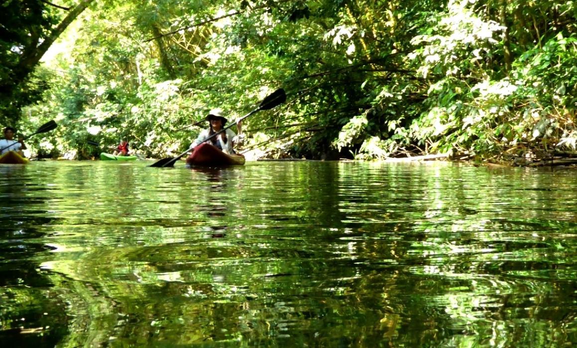 P1040472sierpe kayak