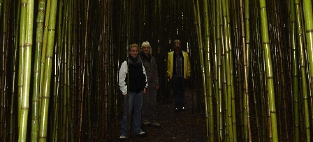 bamboo-lancaster-gardens-costa-rica