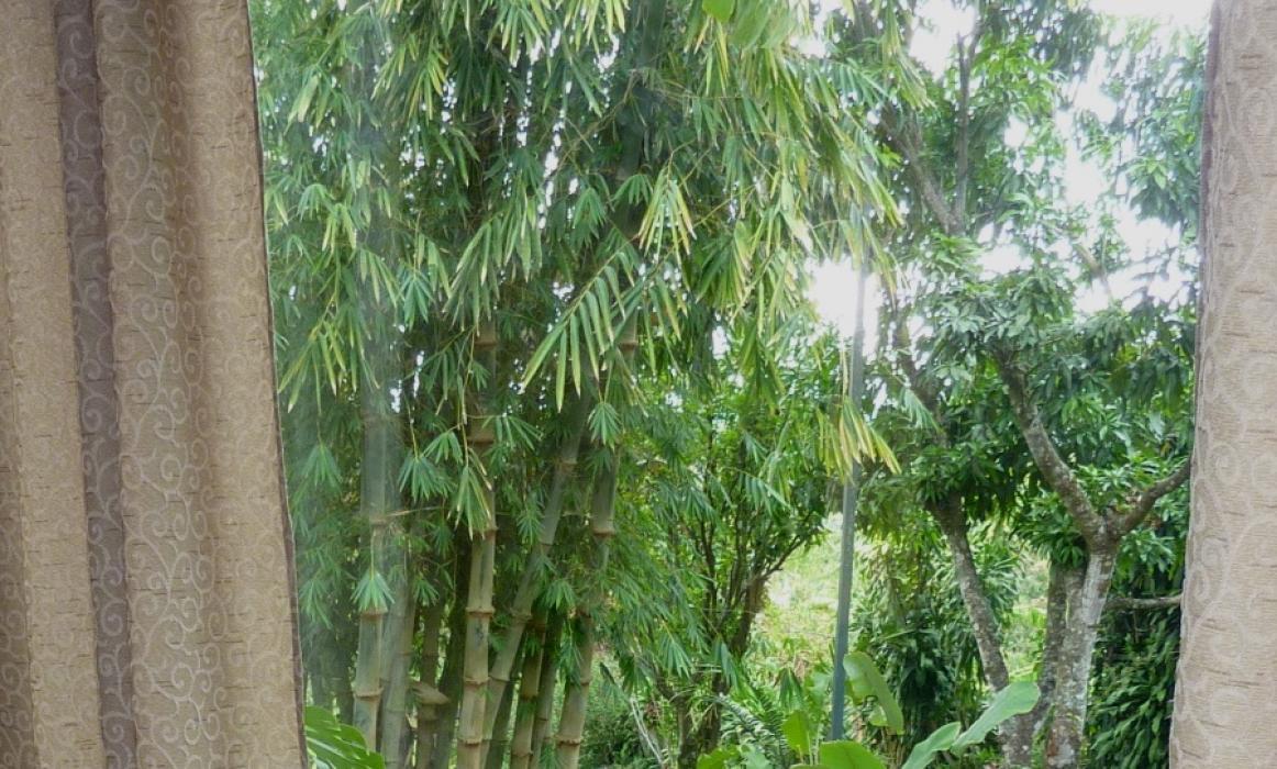 Katydid garden
